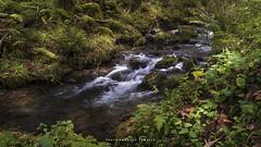 _ATP3731 (anahí tomillo) Tags: nikon d7500 nikond7500 naturaleza nature bosque woods rio river agua water asturias spain lightroom