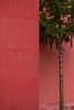 (Dusan Jovanovic) Tags: minimalism tree building durlan nis nikond40 outdoor