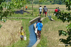 Along the canals of Waikelo Sawah, Sumba Barat (Sekitar) Tags: indonesia sumba barat daya ntt nusatenggaratimur kleinesundainseln lessersundaislands east people canals waikelo sawah pemandangan landscape earthasia
