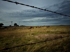 "From the archives... ""Horses and barbed wire."" California central valley, October 2016. (isaacullah) Tags: horses barbedwire barbwire clouds light west california rural"