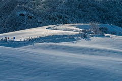 first morning light on the snowy hills (lucafabbricesena) Tags: snow first morning light hills appennino emiliaromagna italy shadows snowywaves landscape nature barbedwire trees roadsign nikon