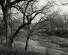 Morning, Trees, Creek (Photographs By Wade) Tags: osagecounty oklahoma trees sandcreek morning early winter