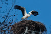 Home Sweet Home (K.Verhulst) Tags: ooievaar stork birds bird vogels vogel rotterdam whitestork