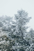_MG_3759 (waychen_C) Tags: nantou renai renaitownship hehuanshan hehuanmountain fog mist now taiwan 台灣 南投 仁愛 仁愛鄉 合歡山 wuling 武嶺