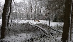 On a snow walk in the neighbourhood (7) (joeke pieters) Tags: 1370670 panasonicdmcfz150 woold winterswijk achterhoek gelderland nederland netherlands holland bocholtsebaan sneeuw snow snowscape paarden paard horse horses pony ponies landschap landscape landschaft paysage december