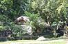 Malinao village, Tuba Forest, Albay, Luzon, Philippines (susiefleckney) Tags: malinaovillage tubaforest albay luzon philippines