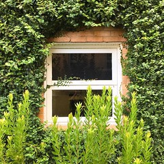 15/365 (retrokatz) Tags: window framed 365the2018edition 3652018 day15365 15jan18 creeper