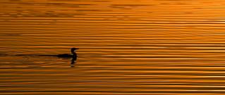 Dawn lines