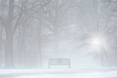 Bench, Fog. (Chancy Rendezvous) Tags: bench fog park elm elmpark worcester lamppost snow winter weather massachusetts newengland trees woods benchmonday