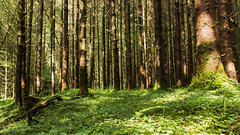 Sonnen-Wald (tan.ja1212) Tags: wald bäume sonnenlicht schatten forest trees sunlight shadow