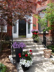 Chicago, Old Town Triangle, House, Front Entrance (Mary Warren 9.9+ Million Views) Tags: chicago oldtowntriangle architecture historic building house residence stairs door entrance portal pottedplants nature flora tree blooms blossoms geraniums red flowers