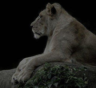 I am the queen ( Linoness)