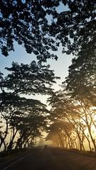 First Twilight (abrarhayat) Tags: twilight early morning sunrise fog foggy winter cold serene peaceful trees arbres arbre highway sylhet bangladesh mobile mobilephotography samsung ttlbd visualsoflife