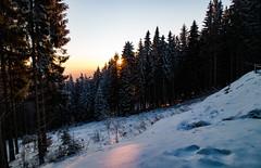 Orange Pinewood [4/6] (gabormatesz) Tags: rožňava košickýkraj slovakia sk roznava intothedeepwoods snow canon 80d photography winter wintermadness crazytrip tree forest woods sunset nature wood pinewood outdoor