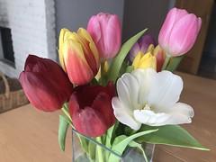 """Die Tulpe. Die Tulpen. Bunte Tulpen sind ein Zeichen für den Frühling. Bei uns liegt draußen leider noch Schnee. Blumen wachsen noch nicht in der Natur - nur im Gewächshaus. • <a style=""""font-size:0.8em;"""" href=""""http://www.flickr.com/photos/42554185@N00/25417699847/"""" target=""""_blank"""">View on Flickr</a>"""