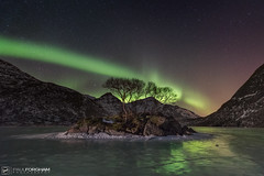 Evergreen (Paul Forgham) Tags: arctic auroraborealis frozenlake frozen ice island landscape lofoten lofotenislands mountains nature nightsky northernlights norway paulforgham peaks rocks scandinavia scapes snow snowcapped stars sunset trees night