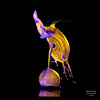 A Splash of Colour. Cloak and Bubble. (Graham R Watson) Tags: highspeed droplets splashart collision colour waterdroplet