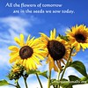 quote-liveintentionally-all-the-flowers-of-tomorrow (pdstein007) Tags: quote inspiration inspirationalquote carpediem liveintentionally