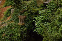 嵐山モンキーパークいわたやま - Arashiyama Monkey Park Iwatayama (Hachimaki123) Tags: 日本 japan 京都 kyoto macacomacacojaponés macacafuscata 動物 さる 猿 animal monkey mono 嵐山モンキーパークいわたやま 嵐山 arashiyamamonkeyparkiwatayama arashiyama macacojaponés macaco