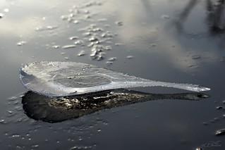 Eisskulptur  / ice sculpture