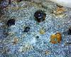 Garnet-mica Schist 01 10x (rcblackmi) Tags: rock mineral photomicrograph macro garnet mica schist geology