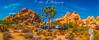 Joshua Trees or Rocks? (The Happy Traveller) Tags: joshuatreenationalpark california southerncalifornia mojavedesert desertlandscape usnationalparks