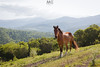 Who's gonna ride your wild horses? (Mariano Colombotto) Tags: argentina raco tucuman horse caballo nature landscape nikon travel ngc photographer photography naturaleza paisaje