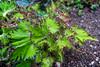 Berlin, Gärten der Welt: Pflanze im Balinesischen Garten - Berlin, Gardens of the World park: Plant in the Balinese Garden (riesebusch) Tags: balinesischergarten berlin gärtenderwelt marzahn