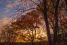Autumn Morning Impressions_0314 (smack53) Tags: smack53 morning earlymorning sunrise paintedsky trees sky clouds autumn autumnseason autumncolors fall fallcolors fallseason westmilford newjersey nikond100 nikon d100