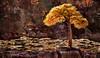 Tree of Fire: Grand Canyon (D'ArcyG) Tags: grandcanyon tree golden fire fiery ledge rocks mountain arizona dusk sunset