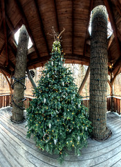 Panorama 3513_hdr_pregamma_1_mantiuk06_contrast_mapping_0.1_saturation_factor_0.8_detail_factor_1 (bruhinb) Tags: panorama hdr longwood kennettsquare pa usa longwoodgardens christmas alongwoodchristmas tree christmastree lookoutlofttreehouse treehouse loft
