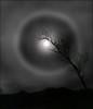 Lunar Halo, 29JAN2018 (McRusty) Tags: lunar halo silver birch tree silhouette mountain moon stratherrick highland scotland