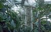 Kew (fraser_west) Tags: film 35mm analog kew plants trees nature light jungle conservatory eos3 wetheconspirators