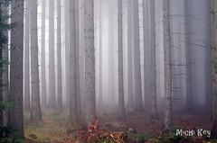Mysterious Forrest (Michi Key) Tags: forrest wald bäume trees fog nebel landscape landschaft nature natur