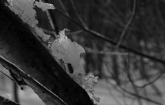 Lichen !? (bd168) Tags: 90mm fujifilm xt10 blancetnoir blackandwhite forest trees arbres glace ice winter hiver