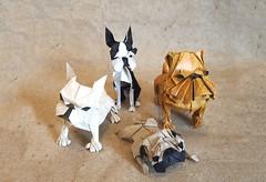 Chinese New Year 2018 Origami Dog Extravaganza! (Origami.me) Tags: origami papercraft papercrafts craft crafts diy paper fold folding dog dogs chinesenewyear 2018 yearofthedog