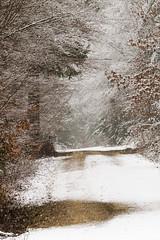 Winterwald (Vitatrix) Tags: nature natur wald weg schnee winter bäume trees forest snow badenwürttemberg