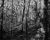 Light and Shadow (The Lower Guards Wood) (Jonathan Carr) Tags: tree woodland light shadow abstract black white bw largeformat 4x5 5x4 monochrome toyo45a rural northeast landscape