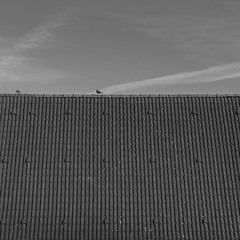 20180224-_DSC3980 (Fabian Tomczyk) Tags: city morning sunrise sonyalpha6000 sony sonya6000 alpha6000 alphacollective alphaddicted a6000 edited lightroom minolta rokkor birds sitting pigeons roof clouds tiles square sky graysky gray bw blackandwhite black white grayscale highcontrast