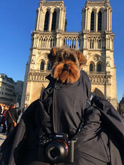 """The Hunchback of Notre-Dame...Quasimodo is a monstrously deformed hunchback who was left on the foundling bench in front of Notre Dame. """"Sixteen years previous to the epoch ...Tourist plays at the beginning of the Seeingtour.""""That man is deaf."""" (bernawy hugues kossi huo) Tags: york hunchback notredame dignitary show church victorhugo front tourist supernatural esoteric edifice romance novel romantic building medieval awaken master sentence deaf magistrate evidence chapter proximate cause mimic haughty personages unfortunate object obsession priesthood grotesque appearance vile creature primitive level square city paris human life humanity absolute power establishment superstition surprisingly disney redeemable qualities yorkshire dog"""