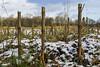 Feld 2048 (Dirk Buse) Tags: münster nordrheinwestfalen deutschland deu rieselfelder nrw de germany feld winter kalt schnee trist landschaft landscape cold natur nature outdoor mft m43