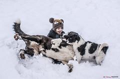 ¿Quién disfruta más? (Jabi Artaraz) Tags: jabiartaraz jartaraz zb euskoflickr perros inaxio nieve invierno winter negua elurra txakurrak