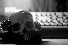 365, Day 231 (clarissa___t) Tags: bw blackandwhite skull decor decorations bones roses moog music instruments instrument guam