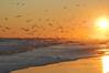 Sun Birds (RobSpark) Tags: resort southcarolinacoast ocean atlanticocean northmyrtlebeach myrtlebeach sunset seagulls beach