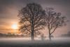 Nebelwiese (Christian Wilmes) Tags: nebel fog mist tree trees baum bäume winter sonne sun sunrise wiese meadow colours light atmosphere