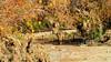 Waiting On You (vgphotoz) Tags: vgphotoz nature animals coyotes wildescape usa arizona shrubs trees