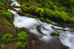 Cascading Creek in the Columbia River Gorge (RobertCross1 (off and on)) Tags: a7rii alpha cascaderange cascades columbiarivergorge emount fe1635mmf4zaoss ilce7rm2 longexposure multnomah nationalscenicarea or oregon pacificnorthwest sony wahkeena cascade creek ferns forest fullframe hiking landscape log mirrorless rainforest stream trees water waterfall