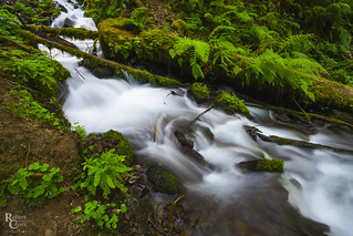 Cascading Creek in the Columbia River Gorge