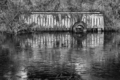 Icy Canal (Mister Oy (6 million views - crikey!)) Tags: leedsandliverpoolcanal leedsliverpoolcanal canal ice cold water frozen freezing winter texture cracked tire tyre mooring nikond850 nikon2470mmf28afs reflection mono monochrome blackandwhite