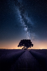Voie lactée sur Valensole (Olivier Rocq ᕈhotography) Tags: valensole voielactée milkyway night nightscape nightshot lavande